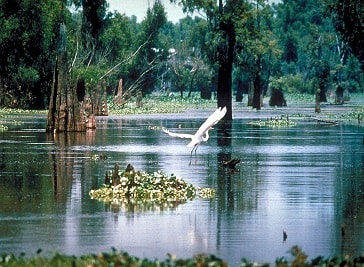 The Atchafalaya Experience in Lafayette